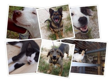 The animals at the Humane Society of Grand Bahama. (PRNewsfoto/Mirabella Florida)