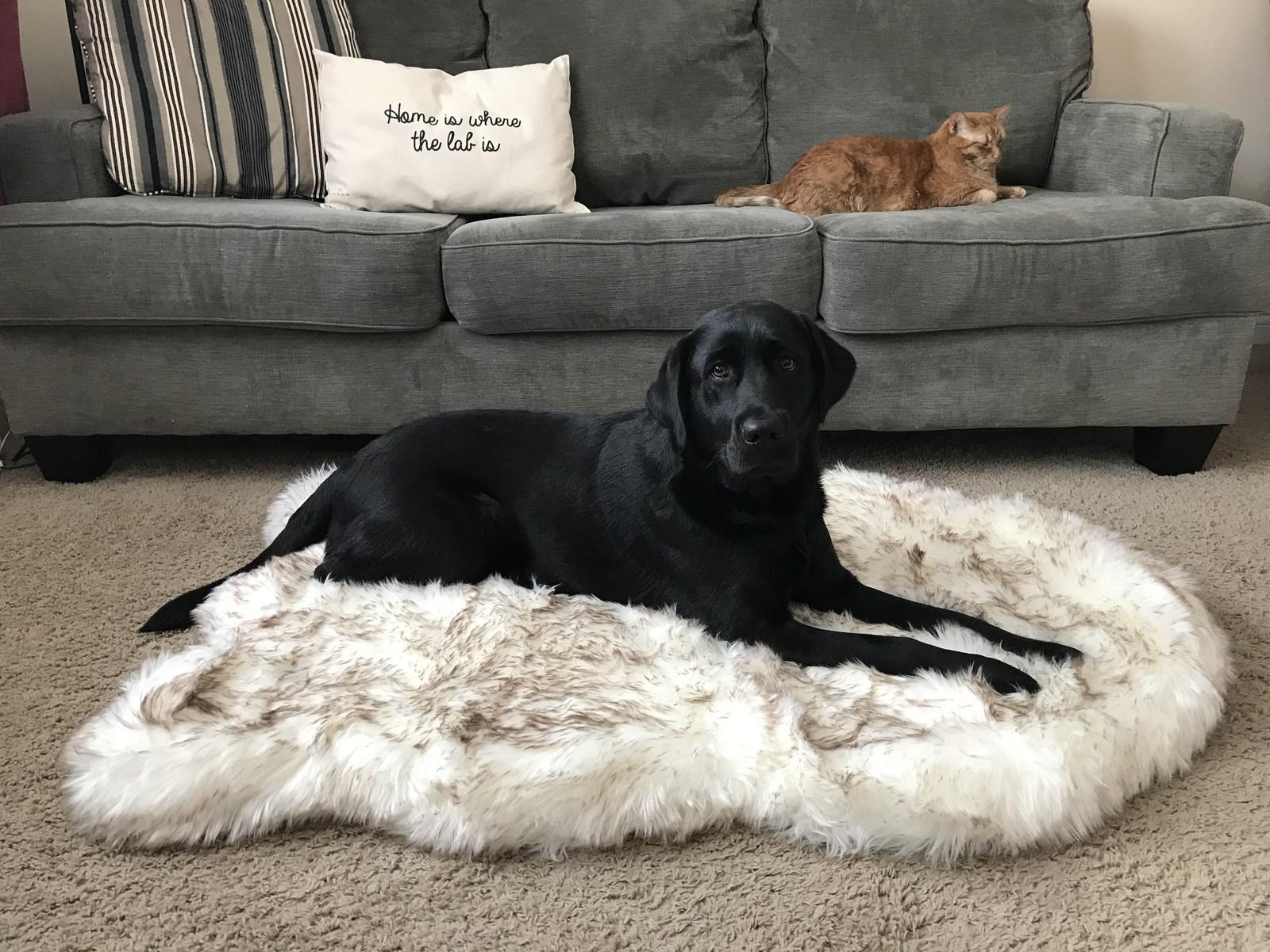 Treat A Dog PupRug FauxFur
