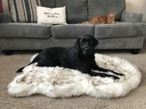 Treat A Dog Curve PupRug Faux Fur Memory Foam Dog Bed product shot (PRNewsfoto/Treat A Dog)