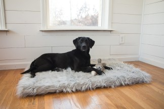 Treat A Dog Rectangle PupRug Faux Fur Memory Foam Dog Bed product shot (PRNewsfoto/Treat A Dog)