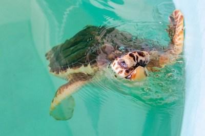 Clearwater Marine Aquarium Snorkel