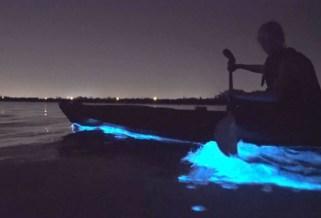 Glowing bioluminescence on BK Adventure tour