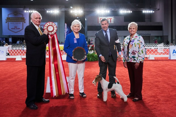 2019-AKC-Puppy-Junior-Stakes